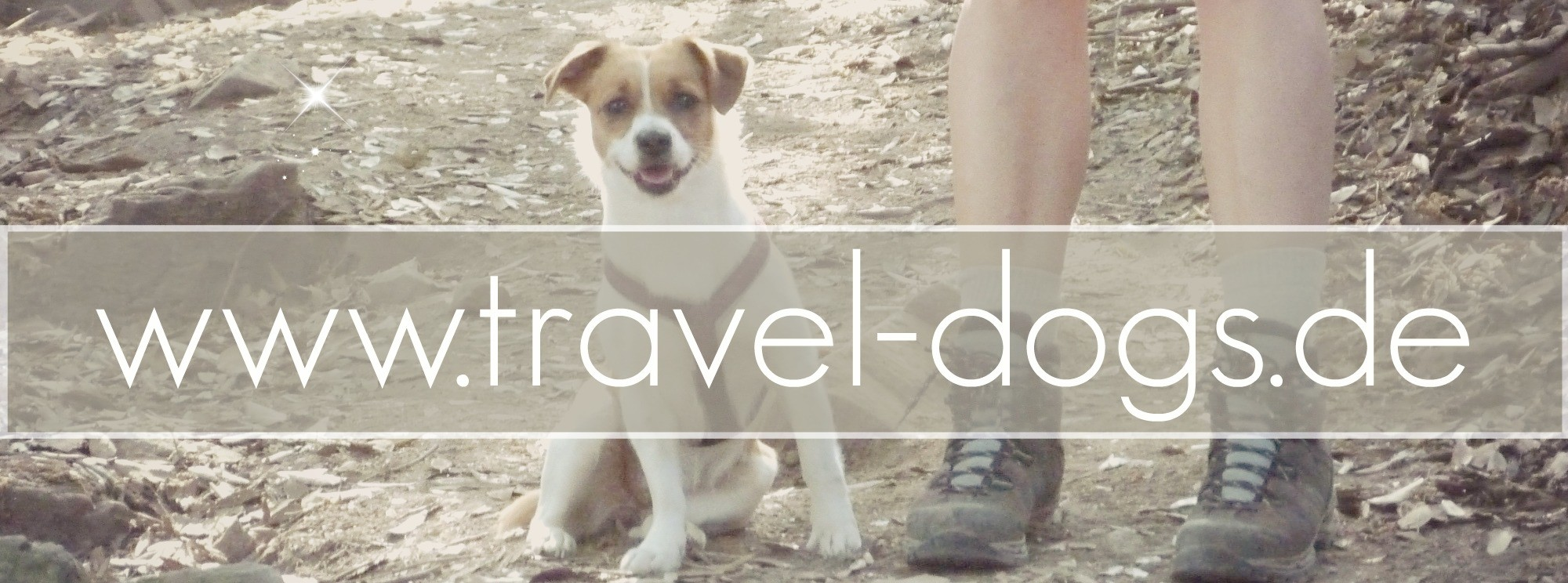 travel-dogs.de