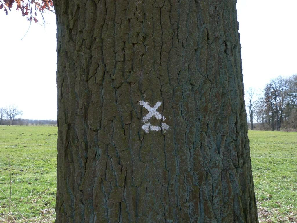 "Immer dem ""X"" entlang"