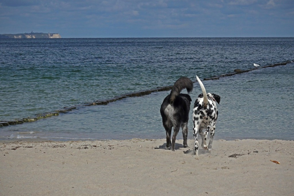 dogs-544495_1280