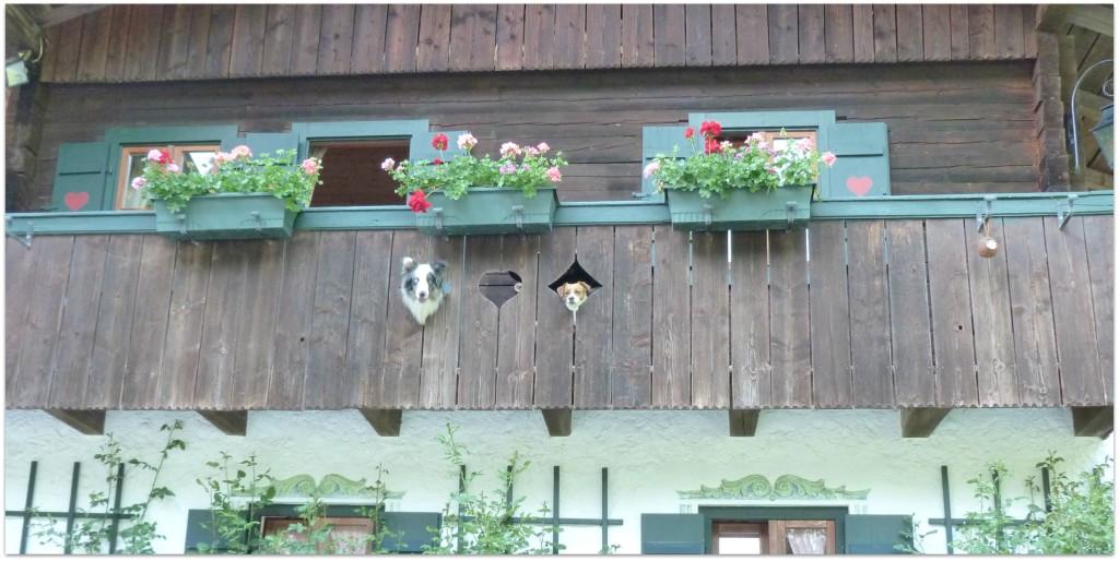 Balkonauskuck