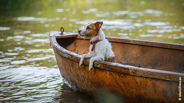 hund_im_boot_traveldogs-de