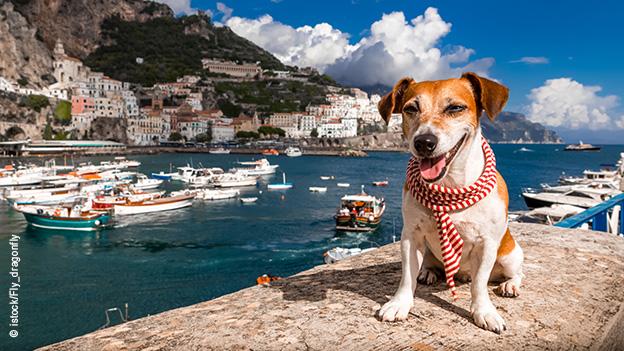 hund_im_urlaub_traveldogs-de