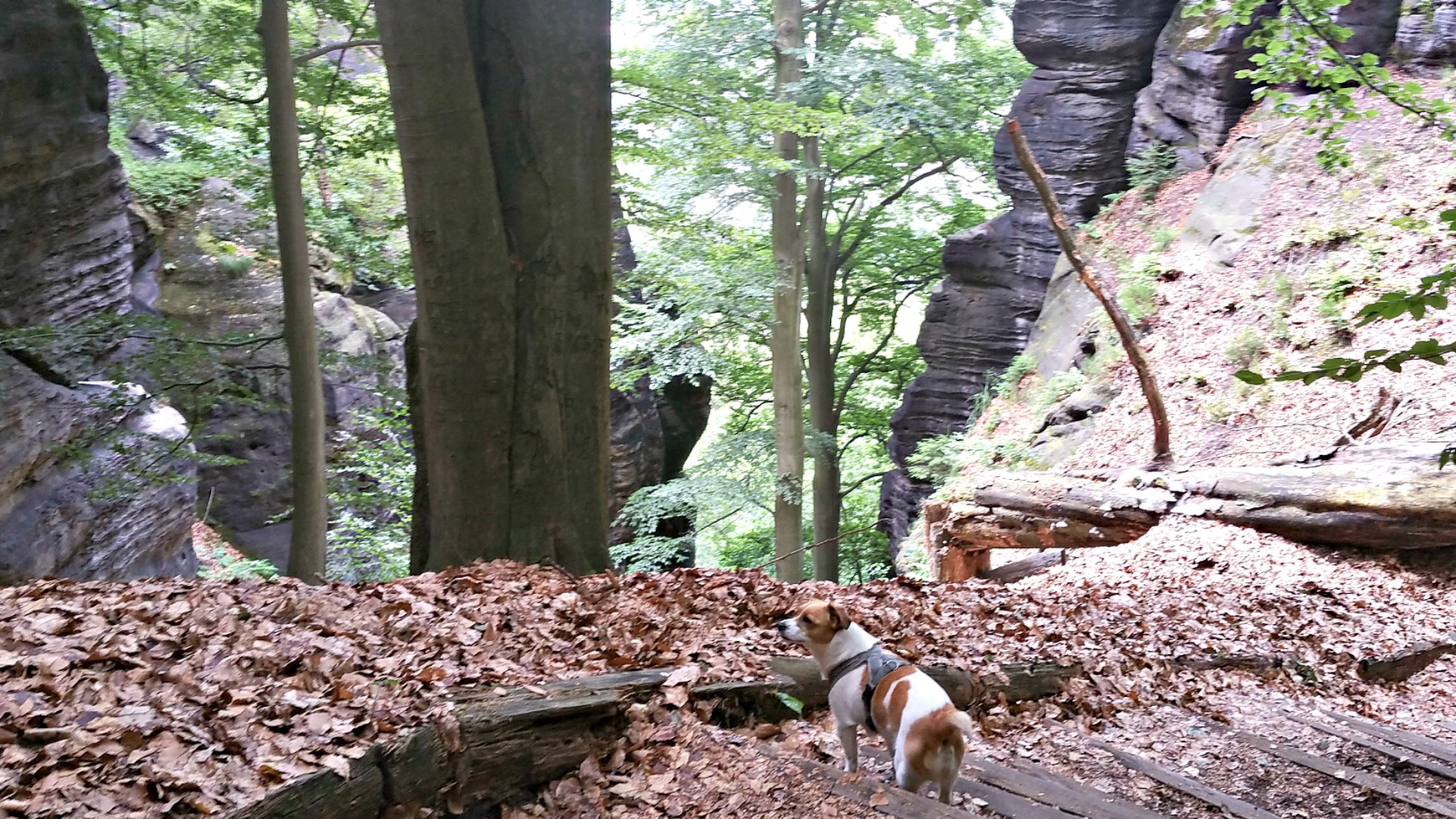 Malerweg mit Hunden - 3. Etappe - travel-dogs.de